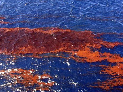 Noaa-oil-spill-gulf-water-photo1